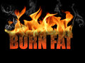 Words Burn Fat Royalty Free Stock Image