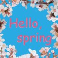 Words Hello spring on a blue background in a frame of flowering trees