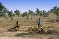 Work in the fields - Mali