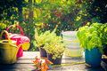 Work Garden Herbs Flowers Summer