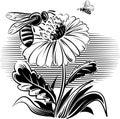 Worker bee on a flower.