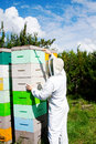 Worker checking beehives that hives are healthy Stock Images