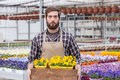 Worker at a greenhouse portrait of young adult male carrying small potted flower in tray Royalty Free Stock Photography