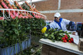 stock image of  A worker at the La Compania Rose Plantation in Ecuador packs roses in the processing factory.