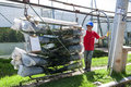 A worker at La Compania Rose Plantation in Ecuador. Royalty Free Stock Photo