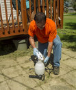 Worker Pouring Weed Killer In A Sprayer Royalty Free Stock Photo
