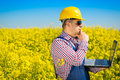 Worker in a rapeseed field doing inspection for biodiesel production Royalty Free Stock Photo