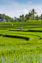 Worker in Rice Terrace - Bali Stock Photo