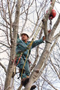 Worker in a Tree with Chainsaw Stock Images