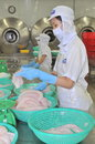 Workers are filleting pangasius fish in a seafood processing plant in Tien Giang, a province in the Mekong delta of Vietnam Royalty Free Stock Photo