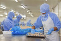 Workers in food processing production line a factory north china Royalty Free Stock Image