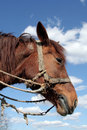 Workhorse Royalty Free Stock Photo