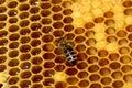 Lavoro ape