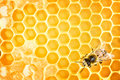 Working bee on yellow honeycomb Stock Images