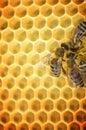 Pracovní včely