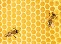 Working bees close up view of on honeycomb Royalty Free Stock Photos