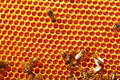 Working bees on honeycombs Royalty Free Stock Photo
