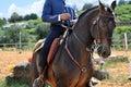 Working equitation horse Royalty Free Stock Photo
