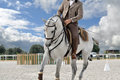 Working equitation horse close up Royalty Free Stock Photo