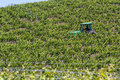 Working the fields napa valley california may man in a tractor grape in springtime may napa valley california Stock Photo