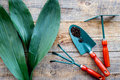 Working in garden. Gardening tools on wooden background top view