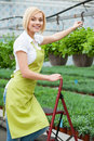 Working in green environment beautiful blond hair woman apron hanging a pot with plant and smiling at camera Stock Image