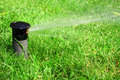 Working lawn sprinkler Stock Image