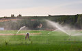Working under sprinkels water farmer on alfalfa field while sprinkler head watering the meadow spain Stock Image