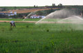 Working under sprinkels water farmer on alfalfa field while sprinkler head watering the meadow spain Stock Images