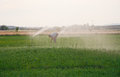 Working under sprinkels water farmer on alfalfa field while sprinkler head watering the meadow spain Royalty Free Stock Photos
