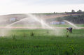 Working under sprinkels water farmer on alfalfa field while sprinkler head watering the meadow spain Stock Photo
