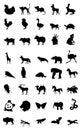 World of animal