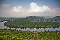 World famous sinuosity at the river mosel near trittenheim with vineyards edge Royalty Free Stock Image