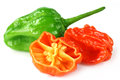 World hottest Naga Morich Royalty Free Stock Photography