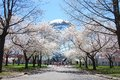 The worlds fair globe in spring unisphere flushing meadow park new york on a clear day with cherry blossom trees Stock Images