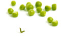 Worm crawling from the eaten pea Royalty Free Stock Photo