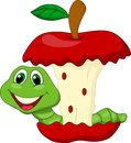 Worm eating red apple cartoon illustration of Royalty Free Stock Image