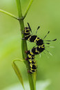 Worms larvae close up on leaves Royalty Free Stock Photography
