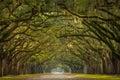 Wormsloe Plantation Oak Trees