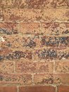 Worn brick color photo of old building with and peeling paint on red bricks Royalty Free Stock Images