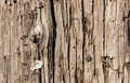 Worn Telephone Pole Texture and Background Royalty Free Stock Photo