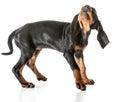 Worried dog Royalty Free Stock Photo