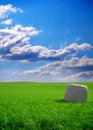 Wrapped bale of hay in field Royalty Free Stock Photo