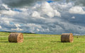 Wrapped Round Brown Hay Bales Field. Rural Area. Landscape. Cloudy Sky and Walking Stork on the left.