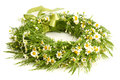 Wreath from camomile isolated on white Royalty Free Stock Image