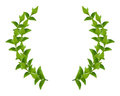 Wreath from Green leaves Royalty Free Stock Photography