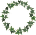 A wreath of Ivy Royalty Free Stock Photo