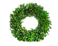 Wreath made of boxwood leaf wreath on white background Royalty Free Stock Photo