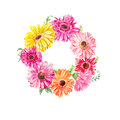 Wreath of pink gerberas or chamomiles isolated on white. Waterco