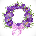 Wreath of purple crocus with pink ribbon spring beautiful bow Stock Photography